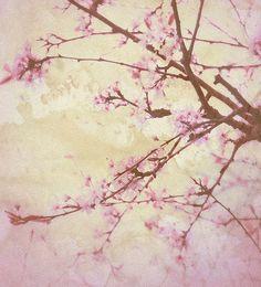 Sakura - Suzanne Smith Photography