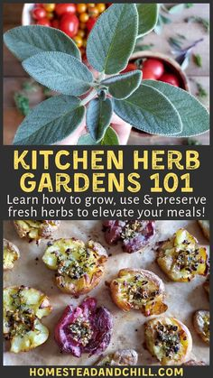 Learn everything you need to know to start a kitchen herb garden. Explore the 14 most common culinary herbs, how to grow them, & use them in the kitchen!