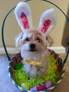 Wait- YO is for Rocky, not Rambo. Animals For Kids, Animals And Pets, Cute Animals, Real Easter Bunny, Pet Dogs, Lose Weight, Puppies, Pet Photos, Adorable Dogs