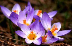 ¡Las 10 Flores Más Costosas Del Mundo!