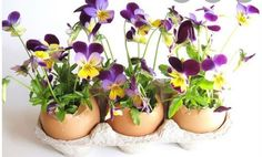 Image Detail for - Egg shells arrangement with purple and yellow flowers picture. Easter Flower Arrangements, Easter Flowers, Floral Arrangements, Easter Plants, Johnny Jump Up, Welcome Spring, Egg Shells, Yellow Flowers, Purple Yellow