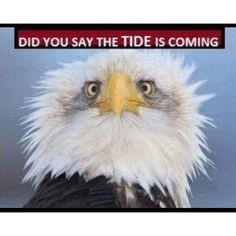 FEAR the TIDE !