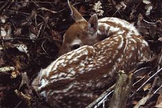 Thymian in The Deer'sForest