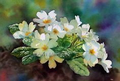 Backlit Primroses by Ann Mortimer Art Floral, Watercolor And Ink, Watercolor Flowers, Spring Flowers, White Flowers, Hortensia Rose, Primroses, Happy Paintings, Daffodils