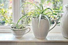 Best Indoor Plant   Growing Indoor Plants   HouseLogic Home Advice