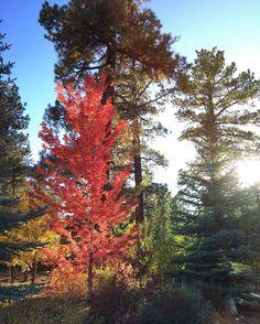 Nice Fall colors around the neighborhood. #mextures #fall #leaves #bigbearlake
