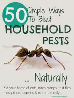 Get Rid Of Household Pests Naturally
