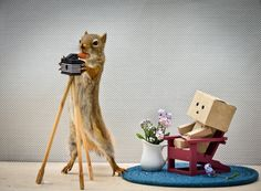 Risque photoshoots with naked box people.   9 Things The Squirrels Are Up To These Days
