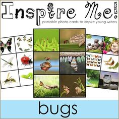 Inspire Me! Story Starter Photo Cards ~ Bugs from 1plus1plus1equals1 on TeachersNotebook.com -  (8 pages)  - Printable photo cards to inspire young writers. $1