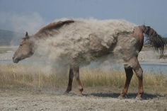 A real horse taking a real dust bath looks like a super cool inspiration for some particulate creature dematerializing.