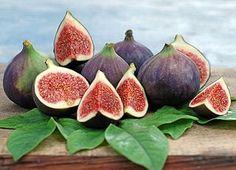L'albero di fico è una delle più antiche piante che siano mai state coltivate. In numerose culture, il fico rappresenta la prosperità, la fertilità e la pace. Il primo riferimento scritto su l'albero