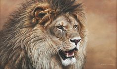In His Prime, male lion by Alan M. Hunt