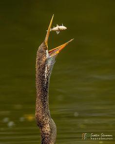 Animal Action, Bird, Animals, Birds, Animales, Animaux, Animal, Animais, Dieren