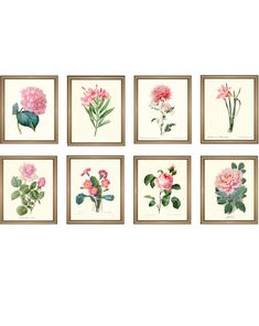 Items similar to Pink Botanical Prints Set. Any 8 PINK botanical prints. on Etsy Owl Nursery Decor, Nursery Art, Elephant Nursery, Botanical Drawings, Botanical Prints, Leaf Drawing, Flower Prints, Rose Prints, Leaf Art