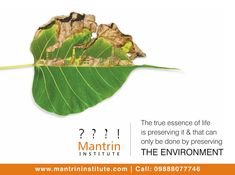 The true essence of life is preserving it & that can only be done by preserving THE ENVIRONMENT. World Environment Day German Language, French Language, Earth Day Drawing, International Literacy Day, World Environment Day, Brand Management, Social Media Design, Go Green, Wildflowers