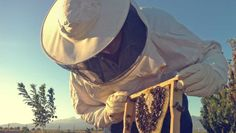 French beekeepers to protest against 'no veils in workplace' law