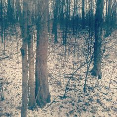 Snow in Kentucky woods - Southern Cross