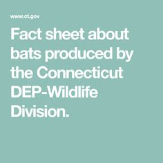 Fact sheet about bats produced by the Connecticut DEP-Wildlife Division.