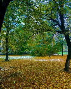 Ура! #первыйснег вон там! видно его # #снег #weekly_feature #estheticlabel #moodygrams #500px #places_wow #igrecommend #tree #featuremeofh #theimaged #featuremeinstagood #pr0ject_uno #colorist #colores #instagram #инстаграмнедели #vscogoodshot #берестейская #myukraine #ukraine_my #ukrainemy #холода #kievonline #hdr #foto_ukraine #typical_ua