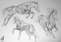 Anatomía de caballo. #ilustracion de LauraBevon.deviantart.com Anatomia para dibujo