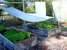 shading garden boxes