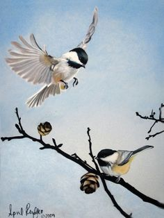 Pastel Drawing Chickadees Bird Fine Art Print - 8 x 10. By April ...
