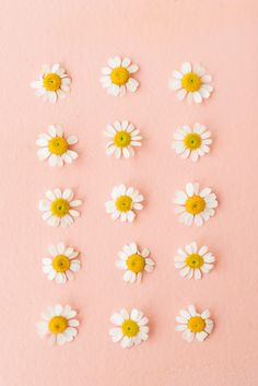 a collection of daisies