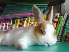 Sleepy little bun:)