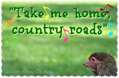 Chicken Quotes, Raising Chickens, Chickens Backyard, Be Yourself Quotes, Animal Rescue, Funny Quotes, Hilarious, Inspirational Quotes, Humor