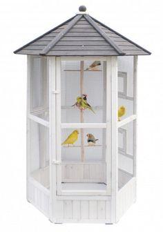 #volière pour #oiseau pour extérieur et #jardin #article #blog #animalerie #zoomalia