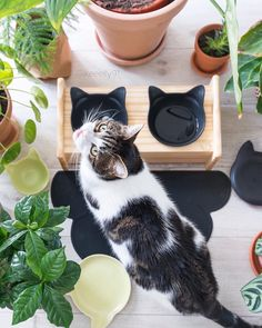 A chic lifestyle of cats and humans living together. This is what living with cats should look like. Stylish, modern, and classy. Check out our elevated feeders for cats, cute ceramic cat-shaped plates and bowls for both humans and pets. Modern living for the modern pets. shop: www.vivipet.com