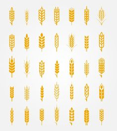 Vector wheat ears icons set by Microvector on Creative Market