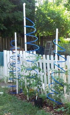 Tomato trellis idea ... looks cool !