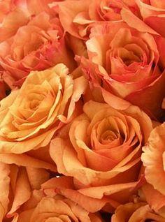 Orange Bliss Rose Bouquet, Milva Roses, EcoBlooms Certified, Eco-Friendly, 2 Doz - OrganicBouquet.com