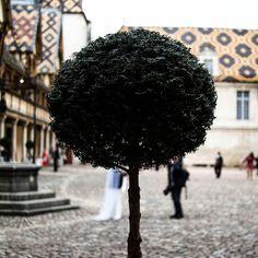 Les Hospices de Beaune magnifique visite et le tout en plein mariage ! #toit #hospice #beaune #burgundy #bourgogne #tree #travel #igers