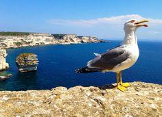 #Bonifacio #Corsica #escursioni #Delphina www.delphina.it
