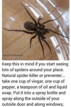 EEK! I hate spiders ! This will do the trick to get rid of them naturally I hope!❤❤❤♥♥♥❗❗❗❗✳✳✳❕❕❕❣❣❣