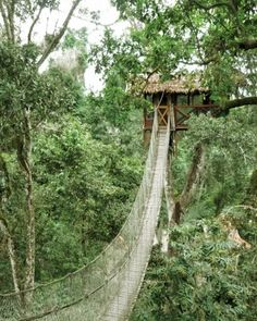 Awesome Tree House  Inkaterra Reserva, Amazonica, Peru