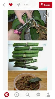 Best 10 Orchids Orchids garden Orchid plants Growing orchids House plants P Orchids In Water, Orchids Garden, Orchid Plants, Air Plants, Garden Plants, Indoor Plants, Orchid Leaves, Potted Plants, Gardening Zones