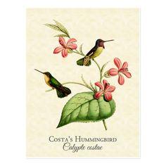 Art de cru du colibri de la côte cartes postales