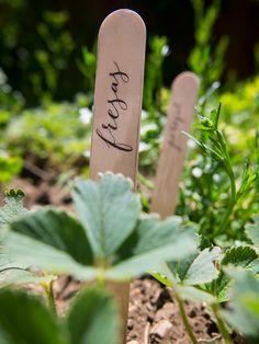 Marcadores de plantas aromáticas para elretopintrest