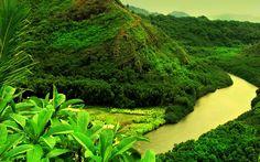 borneo photos | File Name : Borneo Forest Wallpaper