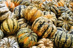 Carnival squash is not just for decorating your Thanksgiving table. Get the recipe for Curry Chicken Stuffed Carnival Squash Fall Recipes, New Recipes, Carnival Squash, Best Butternut Squash Soup, Squash Seeds, Soup Plating, Squashes, Thanksgiving Table, Food Lists