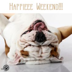 Happieee weekend !!! #brooklyn #brooklynmood #englishbulldog #bulldog #bulldoglove #bulldoglovers #pet #petstagram #petlover #lovedog #dog #doggram #dogstagram #doglove #doglover #friend #adorable #pic #pics