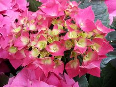 flower, growth, beauty in nature, nature, pink color, plant, petal, outdoors, no people, fragility, bougainvillea, day, leaf, blooming, close-up, freshness, flower head