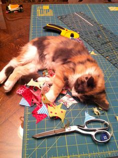 """Abigail is """"sew"""" tired!"""