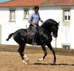 carleenallen:  Riding a Black Lusitano, Portugal