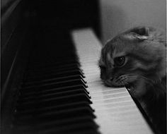 Aww feel better kitten.