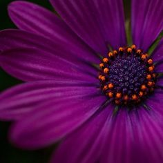 Very purple flower