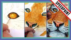 Watercolor Portrait Tutorial, Watercolor Video, Watercolor Painting Techniques, Painting Videos, Watercolor Portraits, Painting Tutorials, Watercolor Paintings Of Animals, Tiger Painting, Animal Paintings